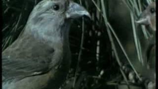 Nacionalni Park Kopaonik - Ptice selice