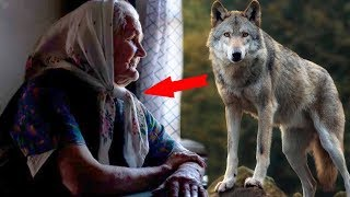 The wolf saved the elderly woman from the gang of fugitives
