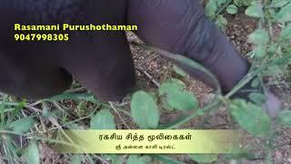 Video Search Result for விஷ்ணு கிரந்தி