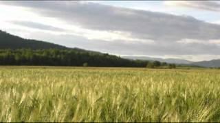Зеленеє жито, зелене - Хор Верьовки