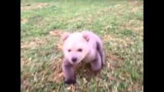 超笑顔かわいい動物の動画集動物好き必見