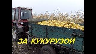 ЗА КУКУРУЗОЙ ТРАКТОРОМ Т-25/FOR MAIL TRACTOR T-25