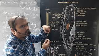 FY Lect 12 Paramecium Binary fission