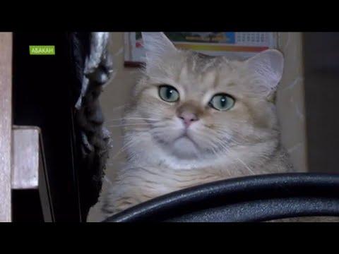 День кошек: какие лучше - породистые или дворовые онлайн видео