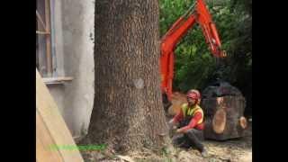 Cut down 2 big  trees (also vertical speedline)