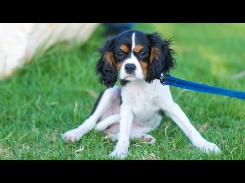 Put On & Fit A Dog Collar Or Harness | Puppy Care