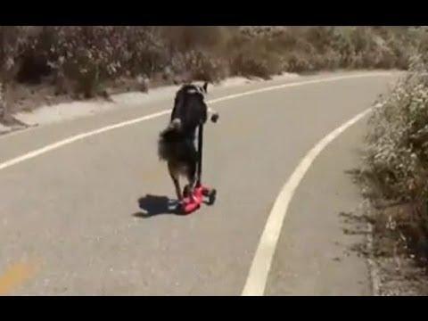 Jumpy the Dog Doing Tricks