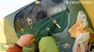 Ловля плотвы зимой на кивок