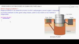 Learn Microbes In Biogas Production meaning, concepts