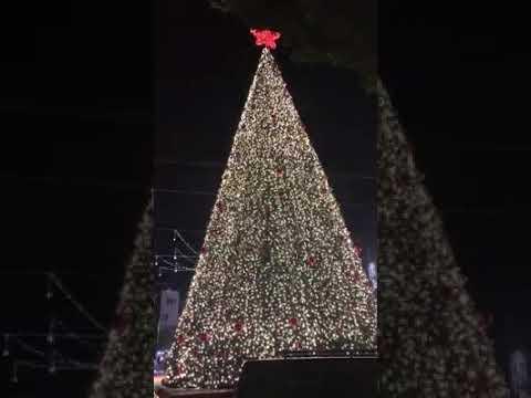 العرب اليوم - أهالي بيت لحم يلتفون حول شجرة عيد الميلاد