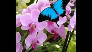 Jojo butterflies reprise