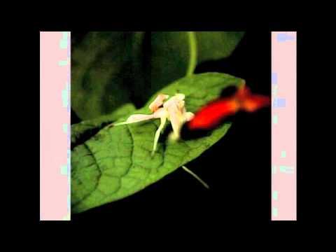 熱帯雨林の昆虫Part1