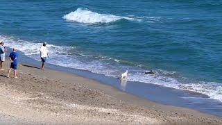 Shark Fishing Florida Feb 3 2017 - Hutchinson Island Florida