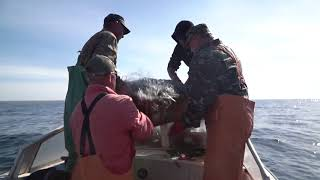Как ловить калкана на азовском море