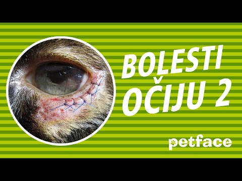 Papilomatosis bovina que es