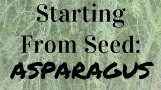 How to Start Asparagus From Seed