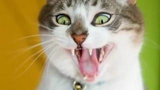 Самые ЧОКНУТЫЕ коты собрались в одном месте! Смотри, не описайся от смеха!)))