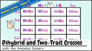 Dihybrid and Two-Trait Crosses
