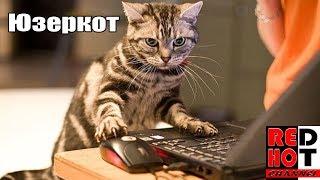 Юзер кот