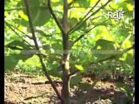 Agriculture Film | Raj Agritech