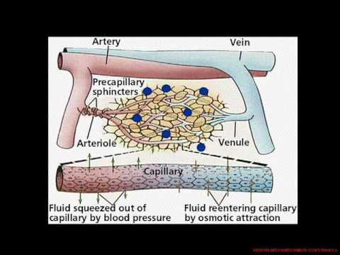 Enfermedad hipertensiva fisioterapia