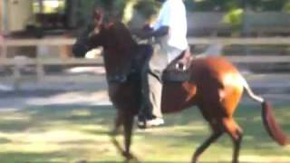 preview picture of video 'Hacienda Taino'