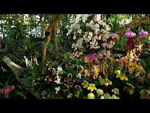 La collection d'orchidées du Muséum national d'Histoire naturelle