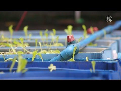 Аквапоника: огород и рыбная ферма прямо в квартире (новости)