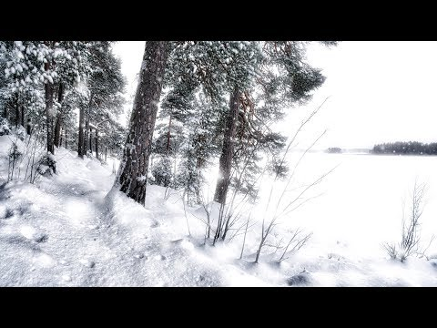 WINTERSUN выпустили новое видео The Forest That Weeps (Summer)