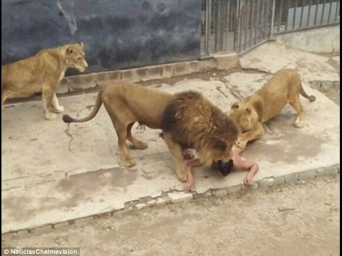 Ex-soldier who stripped naked and fed himself to the lions