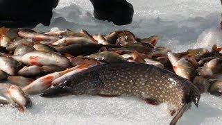 Рыбалка Сетями! Немного ХИТРОСТИ и СЕКРЕТА! Отличный Улов!