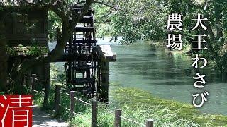 【自然浴60分】大王わさび農場 / 長野県安曇野市 - Nature Sounds 60min