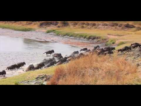 Safari and Beach | Your Ultimate Africa Holiday