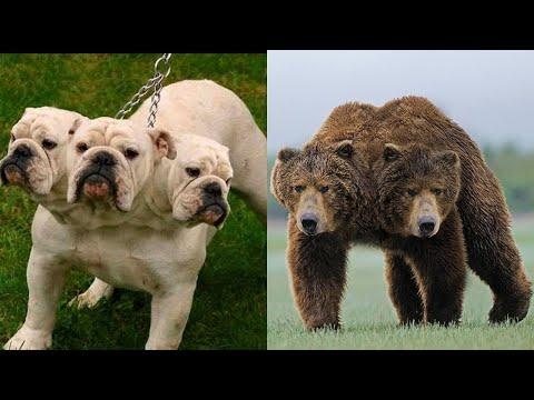 10 невероятных двухголовых животных