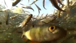 Отчет о рыбалка на реке урал казахстан