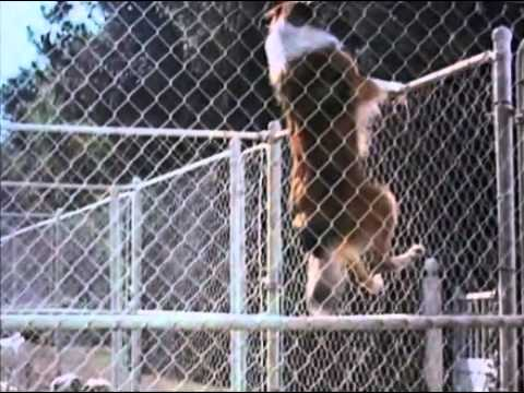 Lassie Triple Feature 2 DVD Set movie- trailer