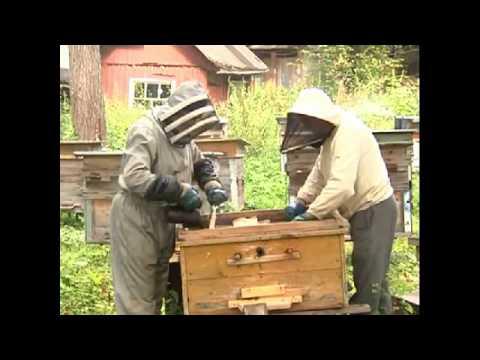 Правила содержания пчел