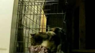Смотреть онлайн Кошка выбралась из клетки, невероятно
