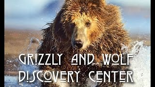 Grizzly & Wolf Discovery Center, Yellowstone National Park