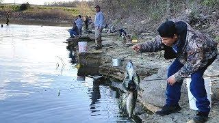 Crappie Fishing From Shore. EP 49