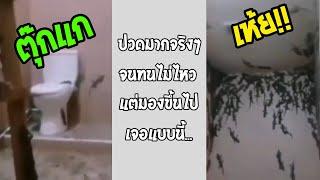 เข้าห้องน้ำ เจอตุ๊กแกเป็นร้อยตัว จะออกจากที่นี่ยังไงดี... #รวมคลิปฮาพากย์ไทย