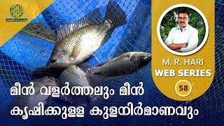 Fish Tank and the Miyawaki Method