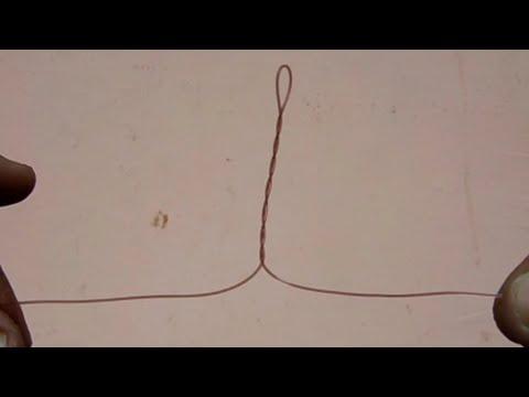 Ang pinaka-epektibong paggamot laban sa parasites