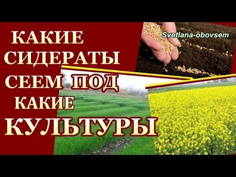 КАКИЕ СИДЕРАТЫ ПОД КАКИЕ ОВОЩИ НАДО СЕЯТЬ ОСЕНЬЮ .СИДЕРАТЫ от кислотности почвы от вредителей