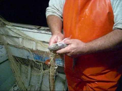 Ricette di preparazione di un boccaglio per pesca