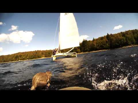Guys on a sailboat save a squirrel from drowning