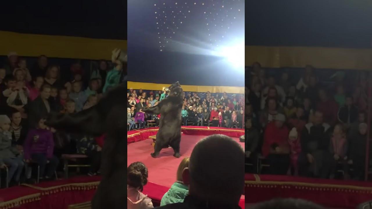 Цирковой медведь напал на дрессировщика в Олонце