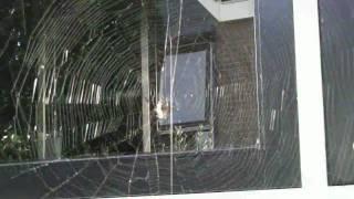 2009 Spiders in your garden