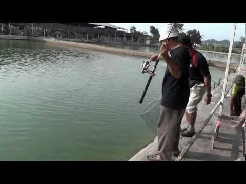 Pond Fishing Malaysia 2012 Double Hookup