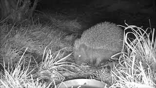 Wildlife Trail Camera - 27.3.2019